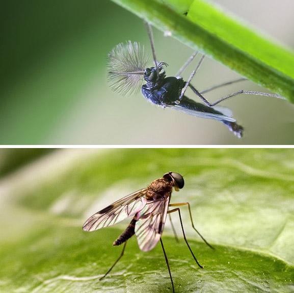 小区虫害控制方案